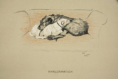Wolfhound Drawing - Amalgamation, 1930, 1st Edition by Cecil Charles Windsor Aldin