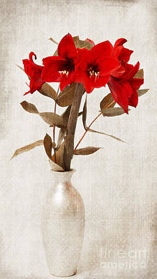 Floral Still Life Mixed Media - Amaryllis by Angela Doelling AD DESIGN Photo and PhotoArt