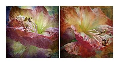 Photograph - Amaryllis Diptych by Patricia Strand