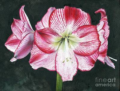 Painting - Amaryllis Flamenco Queen by Penrith Goff