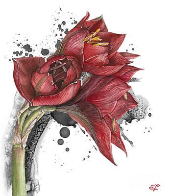 Morning Star Mixed Media - Amaryllis Flowers - 2. -  Elena Yakubovich by Elena Yakubovich