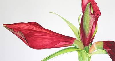 Painting - Amaryllis by Kyong Burke