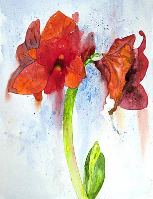 Amaryllis Watercolor Painting - Amaryllis by Lynne Furrer