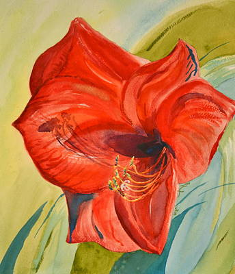 Amaryllis Watercolor Painting - Amaryllis Untimely by Beverley Harper Tinsley
