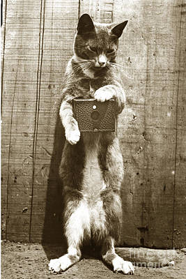 Print featuring the photograph Amateur Feline Fotografer Cat With A Box Camera  Historical Photo 1900 by California Views Mr Pat Hathaway Archives