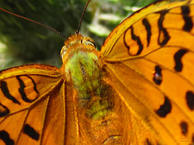 Photograph - Amazing Butterfly by Alexandros Daskalakis