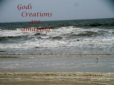 Photograph - Amazing Creations by Robin Coaker