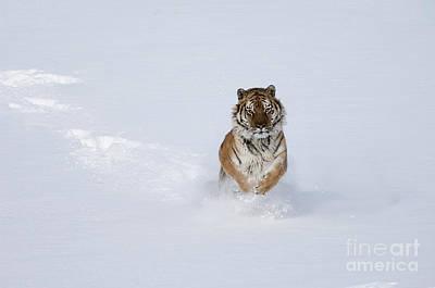 Mammals Photograph - Amazing Grace by Wildlife Fine Art