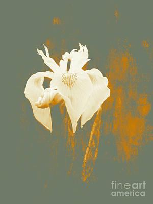 Amazing  Iris Grace  Art Print