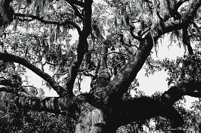 Photograph - Amazing Oak Tree by Debra Forand
