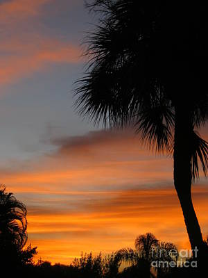 Amazing Sunrise In Florida Art Print