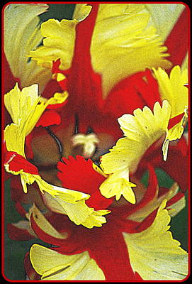 Photograph - Amazing Tulip by Kathy Sampson