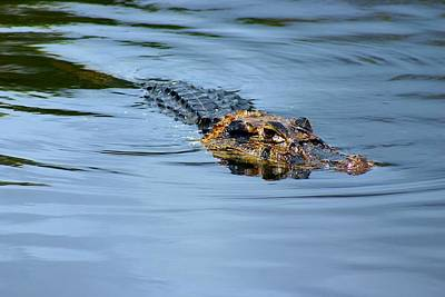 Art Print featuring the photograph Amazon Alligator by Henry Kowalski