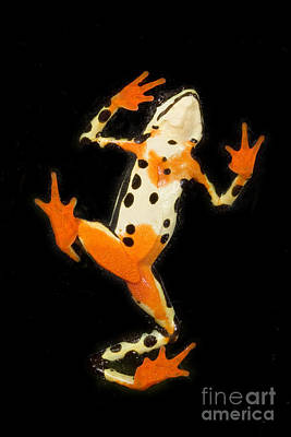 Photograph - Amazon Harlequin Toad by Gregory G Dimijian MD