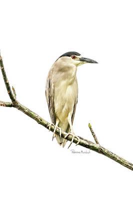 Amazon Heron Print by Ramona Murdock