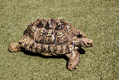 Digital Art - Ambassador Turtle by Photographic Art by Russel Ray Photos