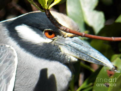 Photograph - Amber Eyes by Judy Via-Wolff