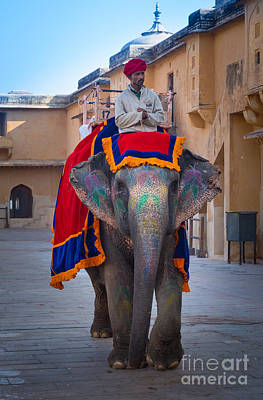 Photograph - Amber Fort Elephant by Inge Johnsson