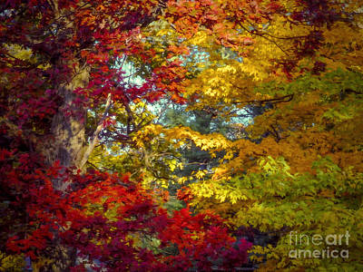Digital Art - Amber Glade by Kathryn Strick