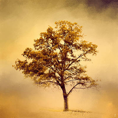 Photograph - Amber Gold Cotton Field Tree by Jai Johnson