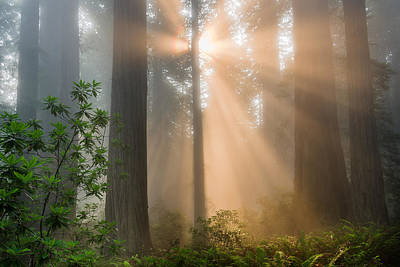 Photograph - Amber Rays And Redwoods by Greg Nyquist