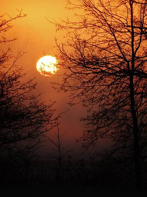 Dark Woods At Sunset Photograph - Amber Sky by Victoria Fischer