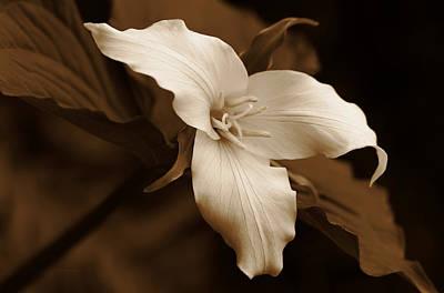 Amber Trillium Wild Flower Art Print by Jennie Marie Schell