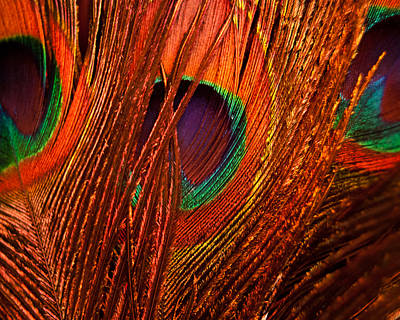 Photograph - Amber Waves Of Plumage by Christi Kraft