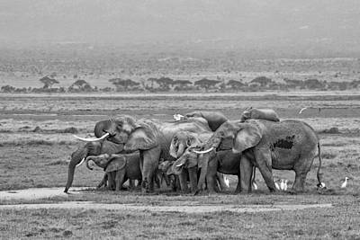 Photograph - Amboseli Ellies by June Jacobsen
