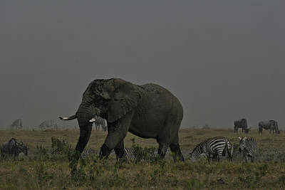 Art Print featuring the photograph Amboseli Giant by Gary Hall