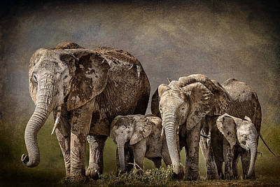 Amboseli Herd Art Print by Mike Gaudaur