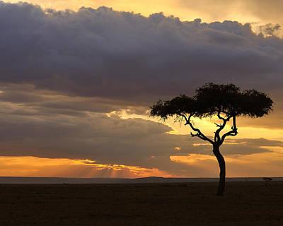Photograph - Amboseli Sunset by Tony Beck
