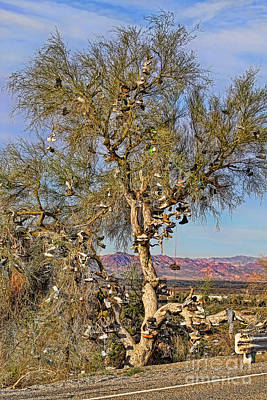 Photograph - Amboy Shoe Tree By Diana Sainz by Diana Raquel Sainz