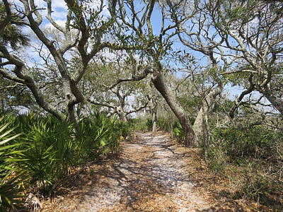 Photograph - Amelia Island Nature Path by Ellen Meakin