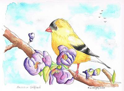 Dibujos Painting - America  Goldfinch by Carlos G Groppa