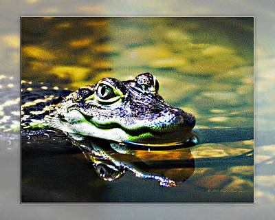 Photograph - American Alligator 2 by Walter Herrit