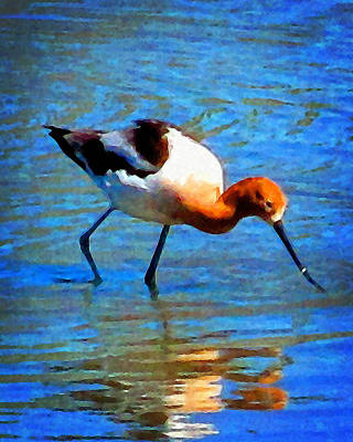 Photograph - American Avocet by Timothy Bulone