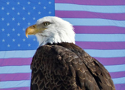 Patriotic Photograph - American Bald Eagle 2 by James BO  Insogna