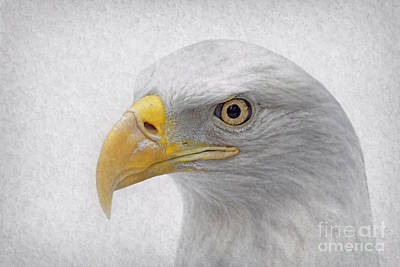Photograph - American Bald Eagle by Charline Xia