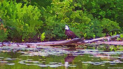 Painting - American Bald Eagle Fishing For His Supper by Rosemarie E Seppala
