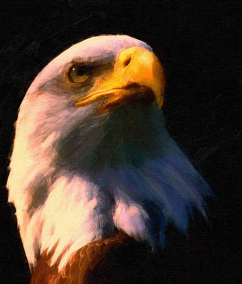 American Eagle Painting - American Bald Eagle by MotionAge Designs