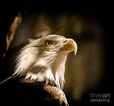 Car Window Photograph - American Bald Eagle by Robert Frederick