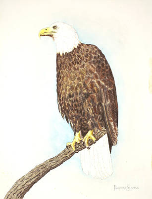 American Bald Eagle Watching Art Print by Dag Sla