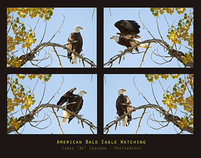 Photograph - American Bald Eagle Watching by James BO Insogna