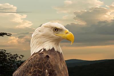 Preditor Photograph - American Bald Eagle With Peircing Eyes by Douglas Barnett
