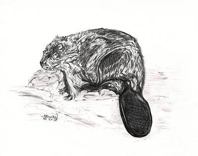 Beaver Mixed Media - American Beaver by Heidi Kunkel