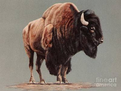 American Bison Art Print by DiDi Higginbotham