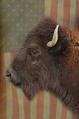 Photograph - American Bison Headshot Profile by James BO  Insogna