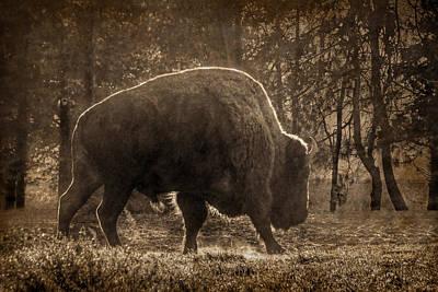 Photograph - American Bison by Nikolyn McDonald
