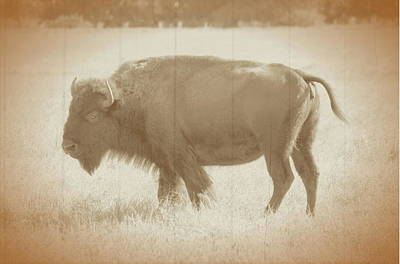 Photograph - American Bison Vintage by Ronald T Williams